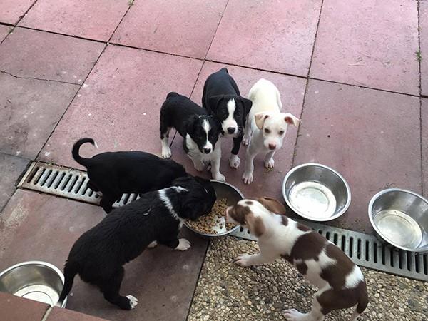 Tierschutz Shop Spendenaktion zu Weihnachten