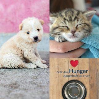 Tierschutz-Shop Spendenaktion zu Weihnachten